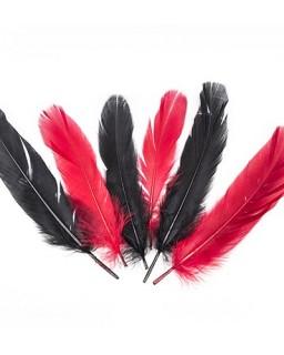 Feathers Gala