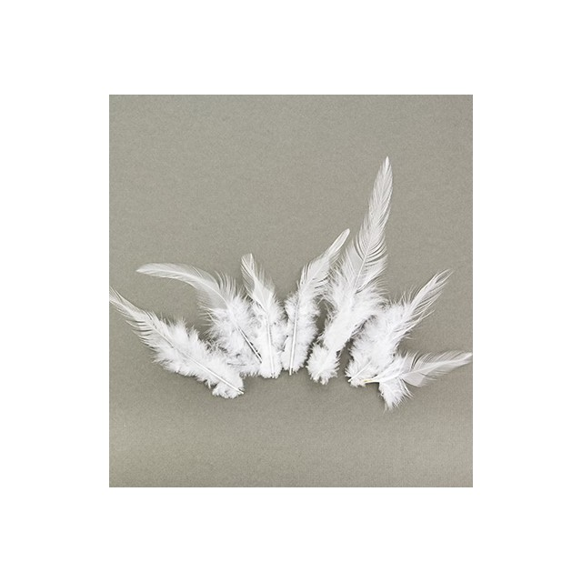Feathers Pure White
