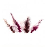 Feathers Wine