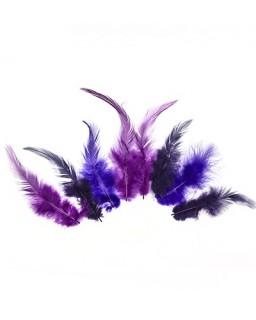 Feathers Magic