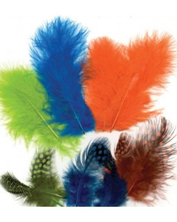 Feathers Neon