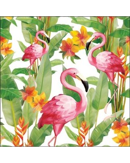 Flamingo's White
