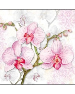 Orchids Lilac