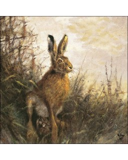 Portrait of Hare
