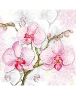 servet orchidee