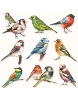 servet vogels
