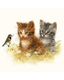 servet kittens