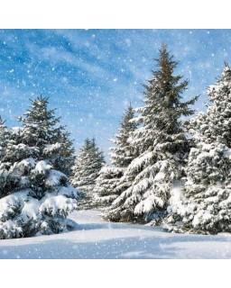 servet Kerstbos