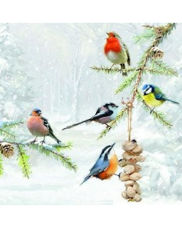 servet Winter vogels
